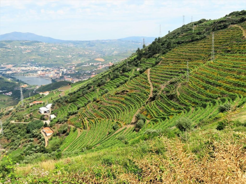 fish pate; the Douro valley's stunning views